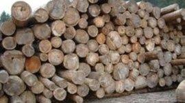 legname pretagliato, abbattimento alberi, taglio alberi