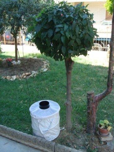 Trappole per zanzare