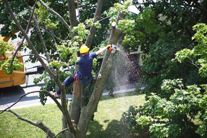 Tree Removal Bryan, TX