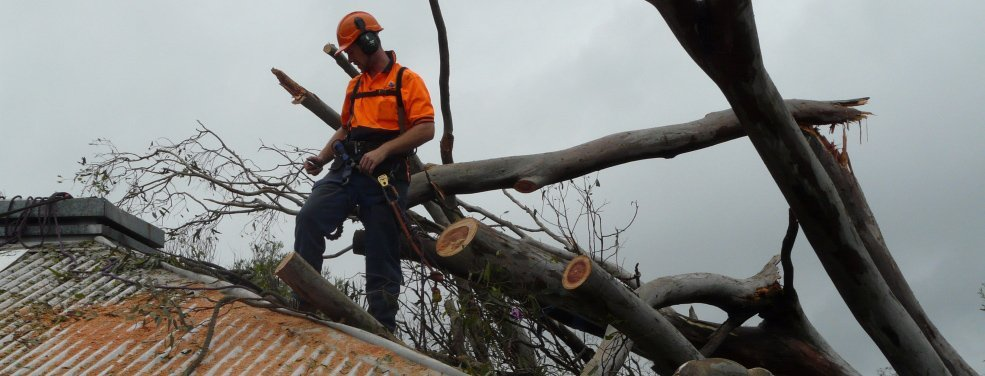 Emergency tree felling services
