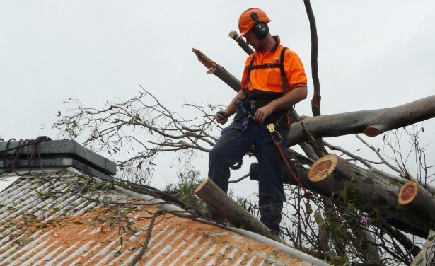 A tree services expert in Brisbane