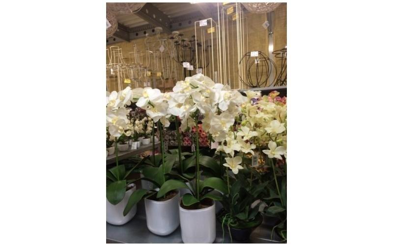 Vasi orchidee finte