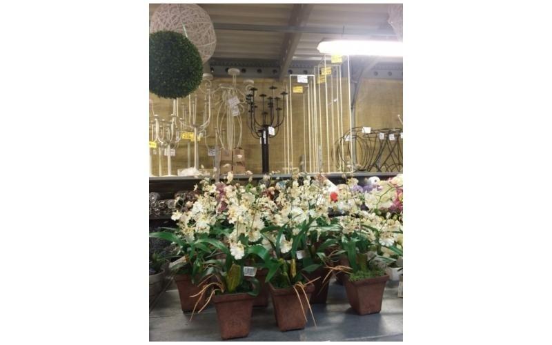 Orchidee finte