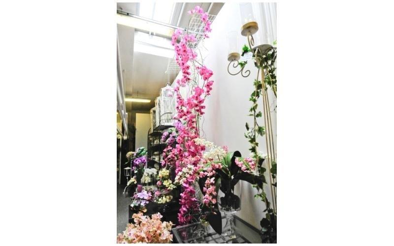 Rampicanti con fiori rosa