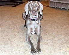 Pet dog grooming