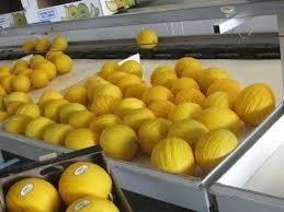melone gialletto