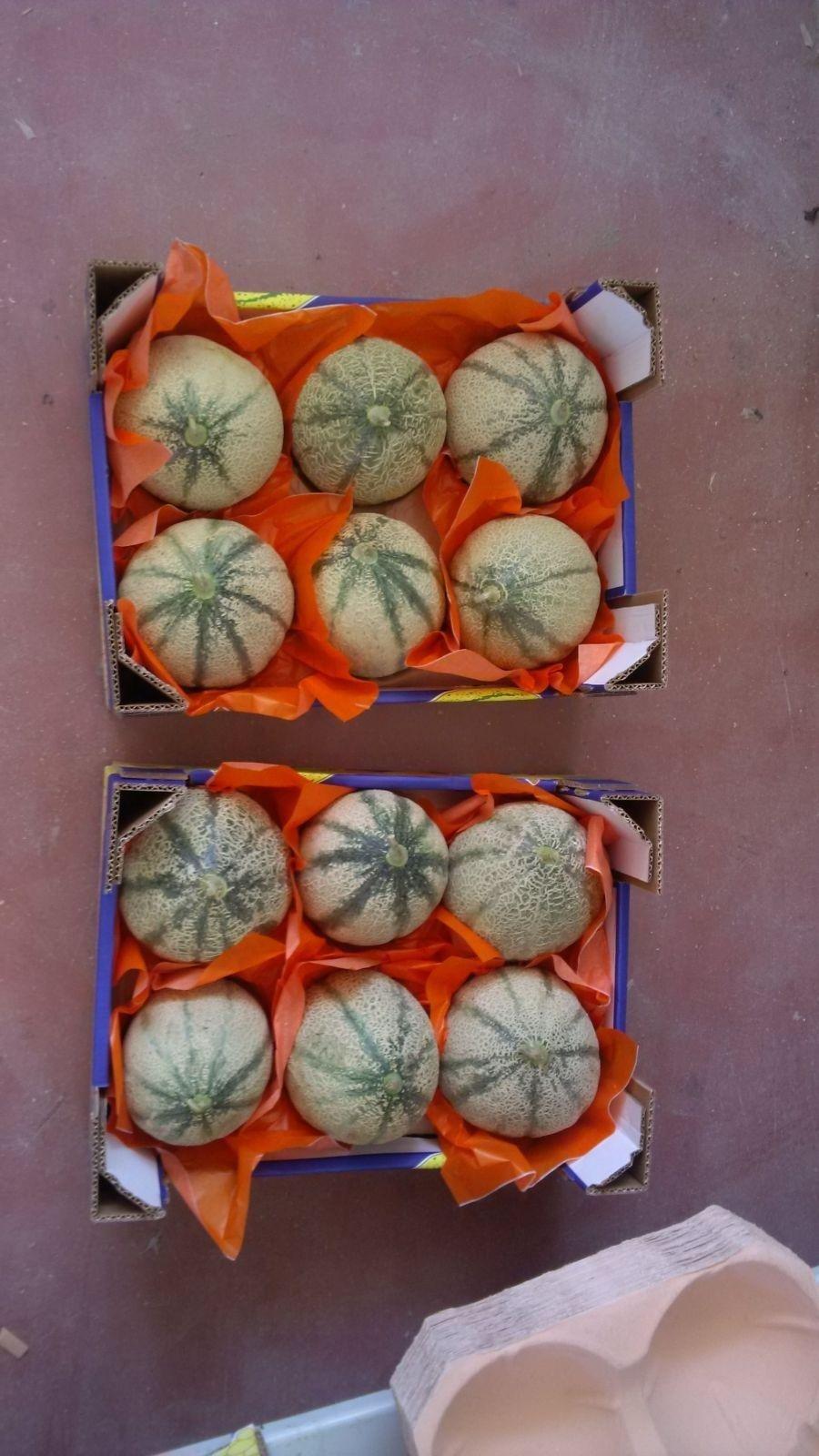 meloni cantalupo