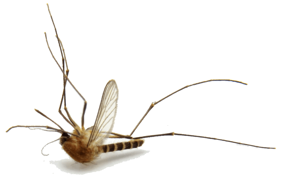 Greeley Pest Control And Bed Bug Extermination Enviropest