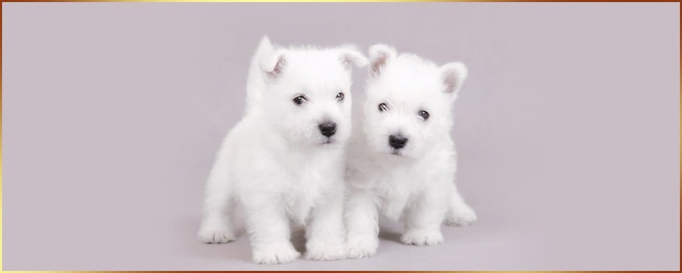 two small little puppies