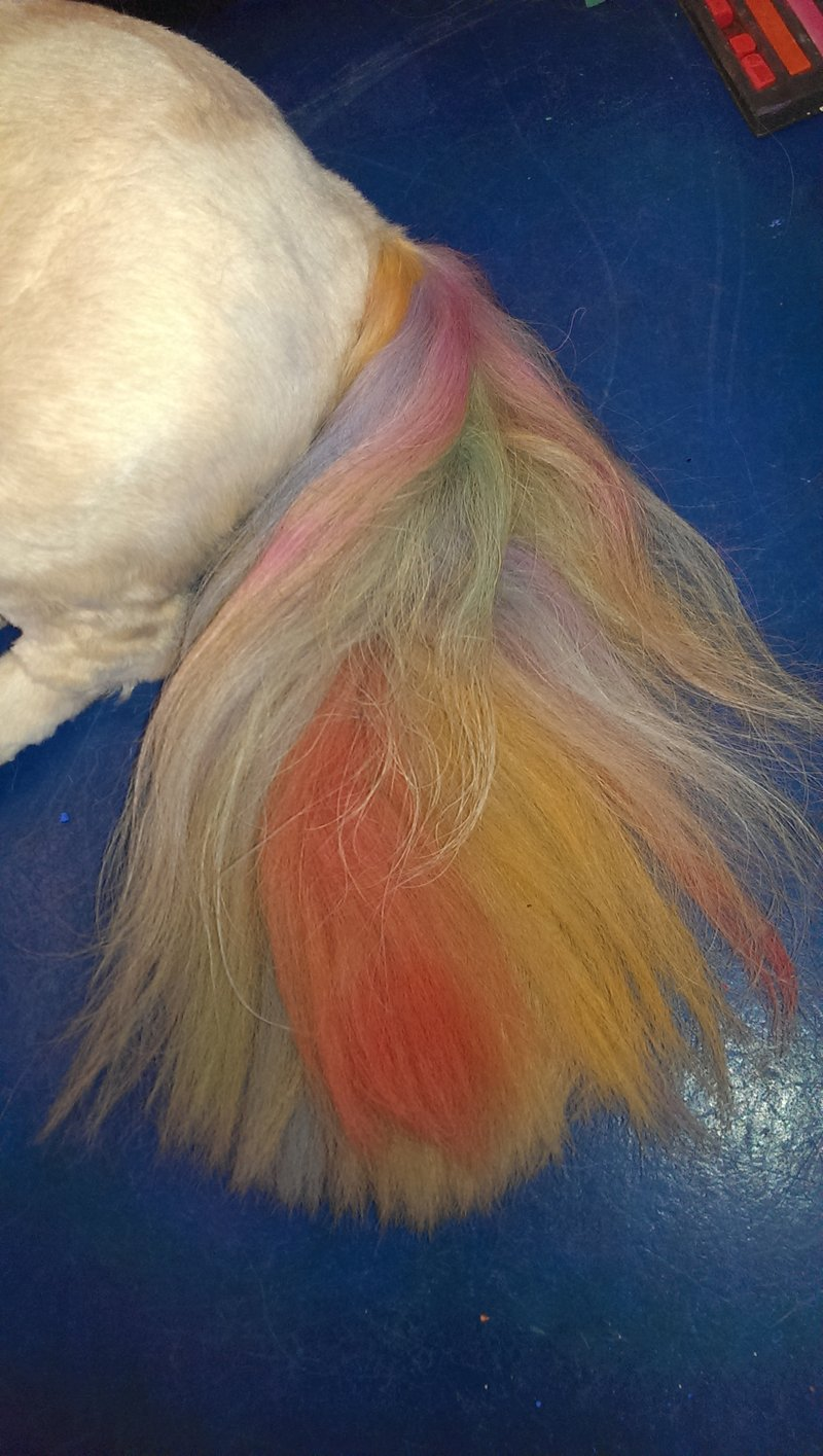 Boo the Lhasa: on her ears clip in feathers, multi-coloured tail using chalk. butterfly