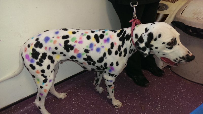 Ruma the Dalmatian: multi coloured blow pen spots