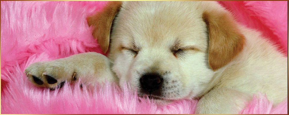 a small sleeping puppy