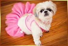 a small cute puppy with a pink frock