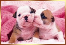 two little puppies playing