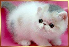 a small cute cat