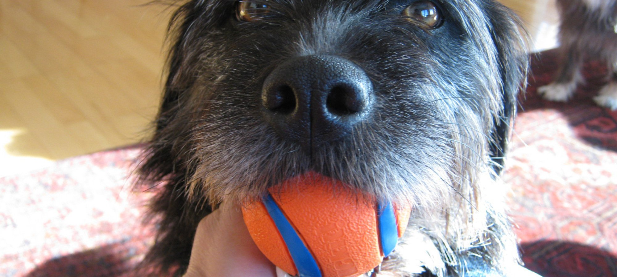 Dog with ball in its mouth