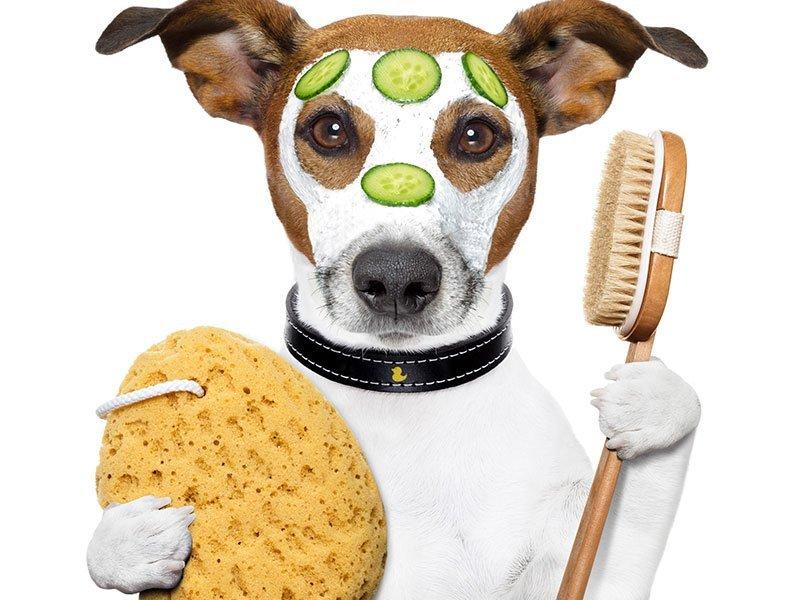 immagine di una cane con maschera di bellezza, spugna e spazzola