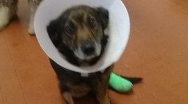 pronto soccorso veterinario, operazioni chirurgiche, ecografie animali