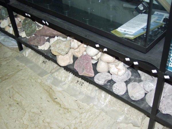sassi da acquario
