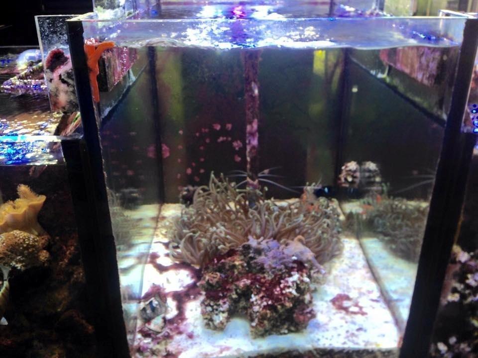 vista frontale di una teca con coralli