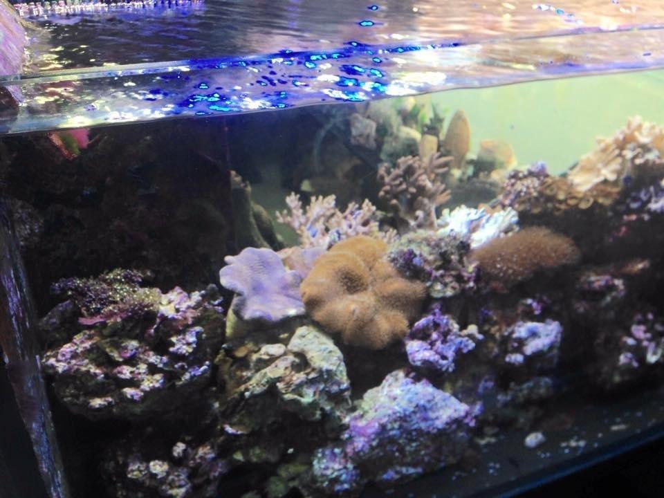 assortimento coralli di vario tipo in un acquario