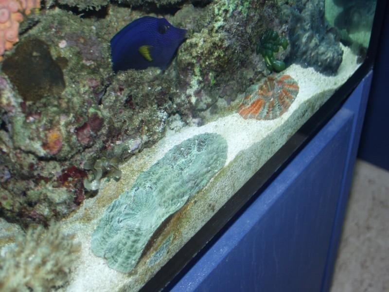 acquario con pesce tropicale blu