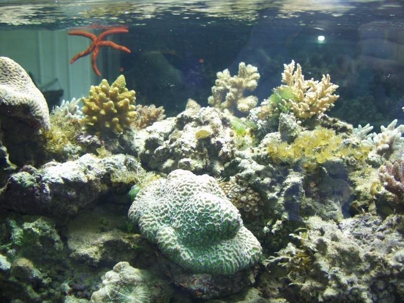 barriera corallina in un acquario