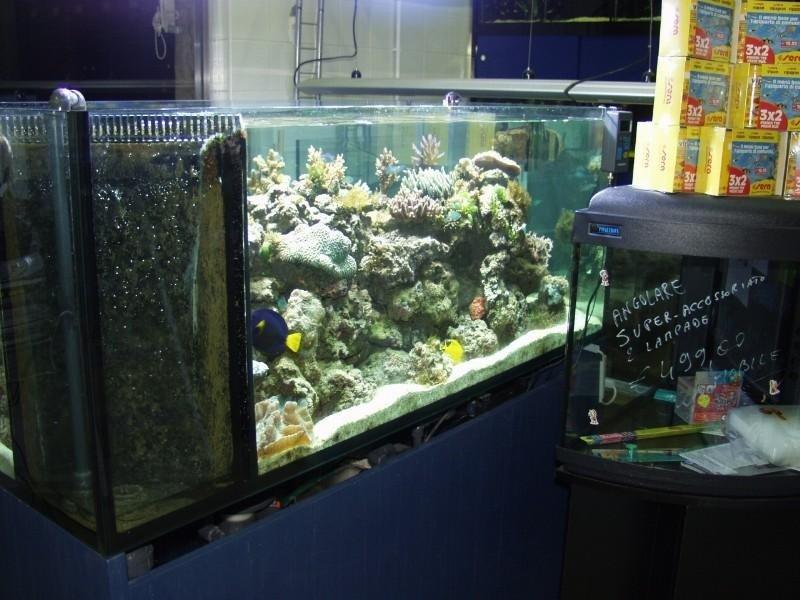 teca con pesci e coralli