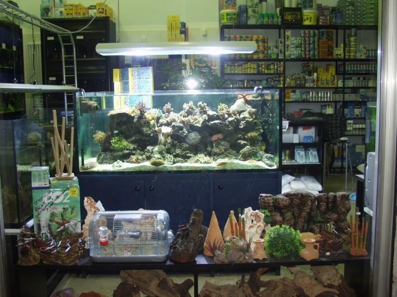 acquario con piante sassi e accessori utili
