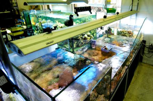 fila di aquari visti dall`alto