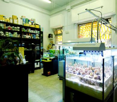 acquari tropicali e assortimento prodotti