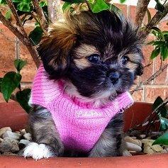 Kelsey ~ Krista's Dog