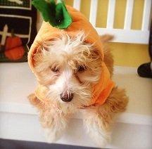 Syd ~ Mitch's Dog