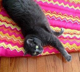 Gracie ~ Jennifer's Cat