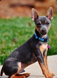 Jasper ~ Stephanie's Dog
