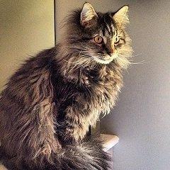 Peter ~ Jennifer's Cat