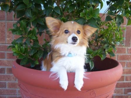 Luke ~ Jennifer's Dog