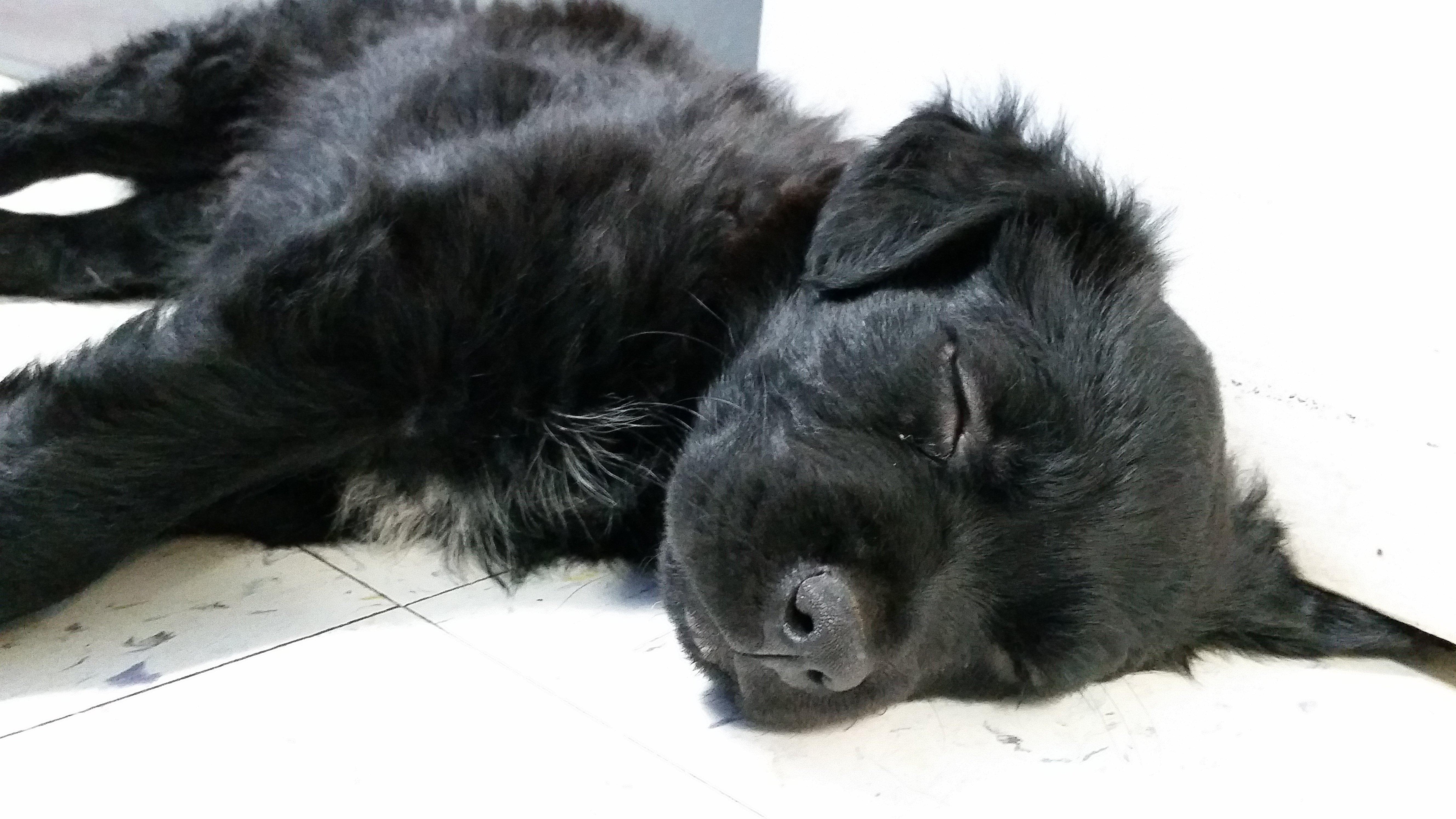 Lucy ~ Misty's Dog