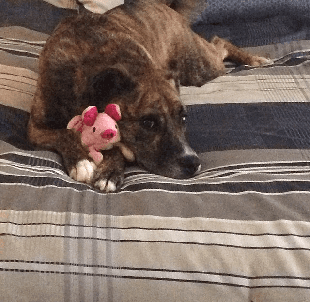 Phil ~ Stephanie's Dog