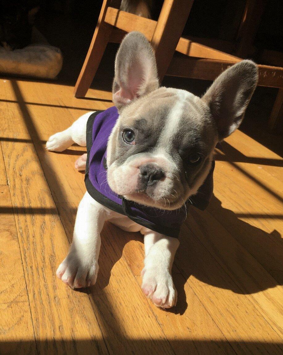 Piper ~ Dr. Roberts Dog