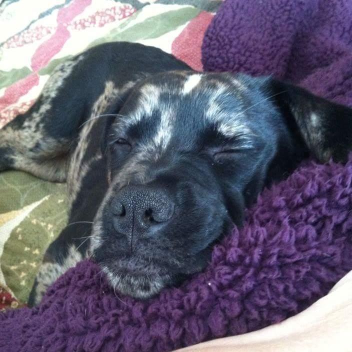 Ethel ~ Misty's Dog