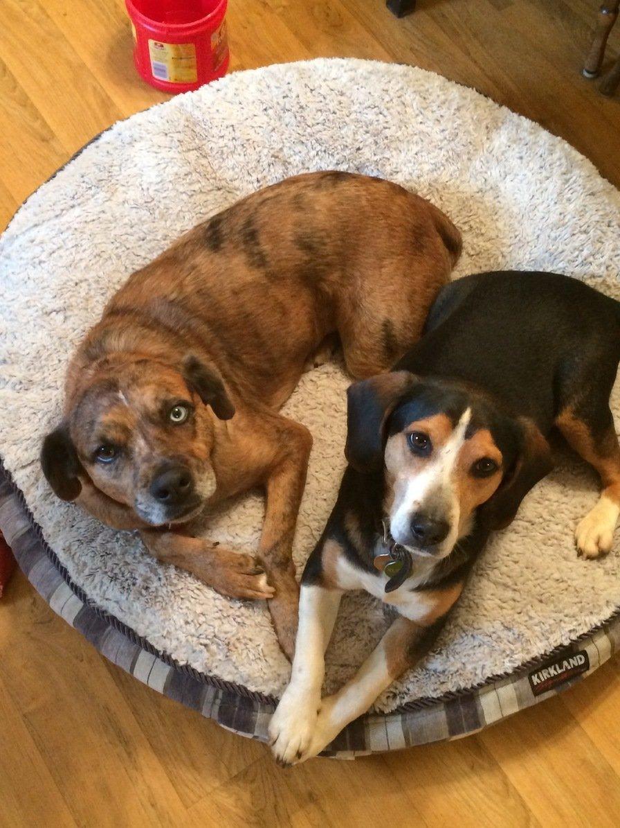 Moxi & Rugar ~ Nathan & Holly's Dogs