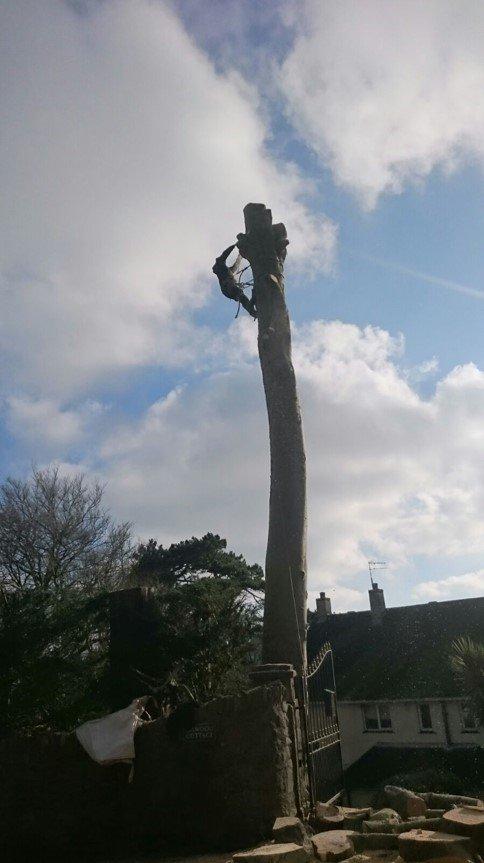 tree cutting process
