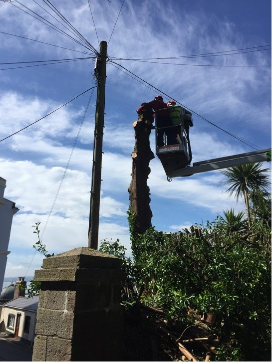 tree protection from wires