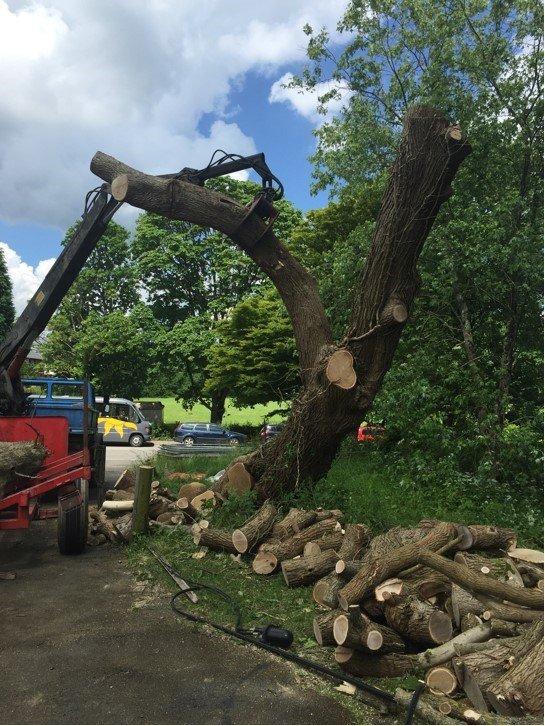 pulling down tree