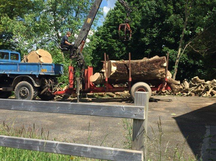 tree cut logs