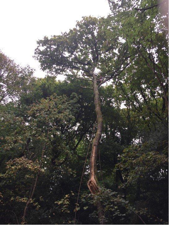 tree pulling