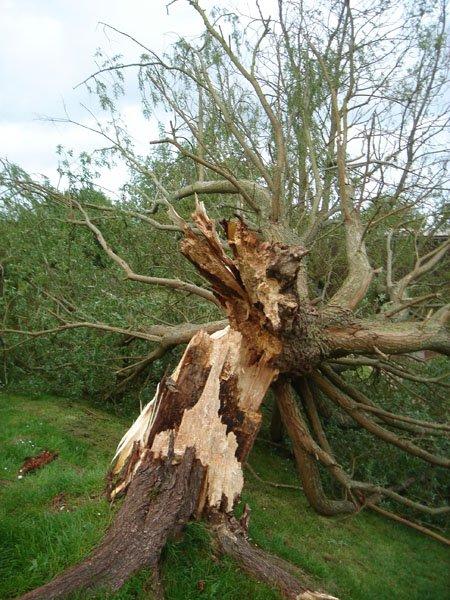 fallen tree in garden