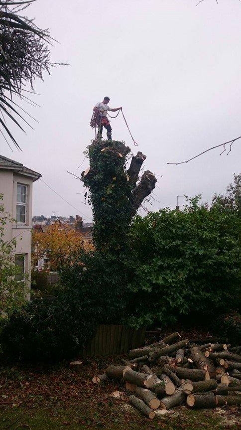 tree branch removals