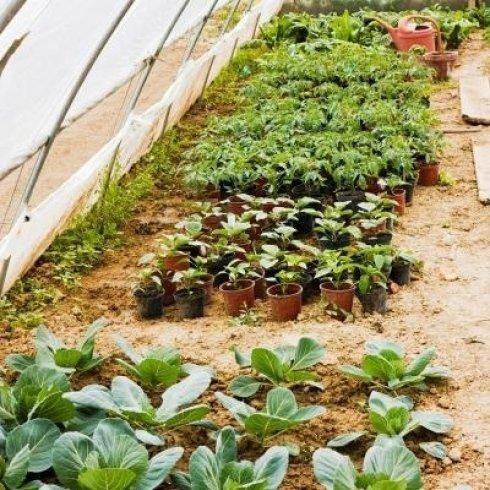 Assortimento di piante
